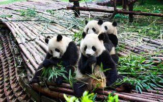 Чэнду, Китай – достопримечательности и развлечения