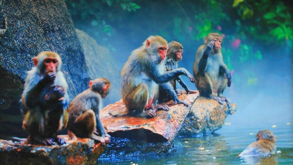 Достопримечательности Хайнань: остров Обезьян