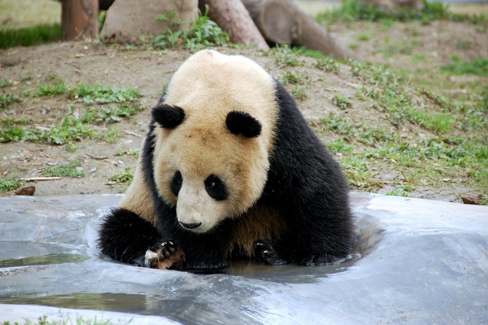 Достопримечательности Шанхая: зоопарк