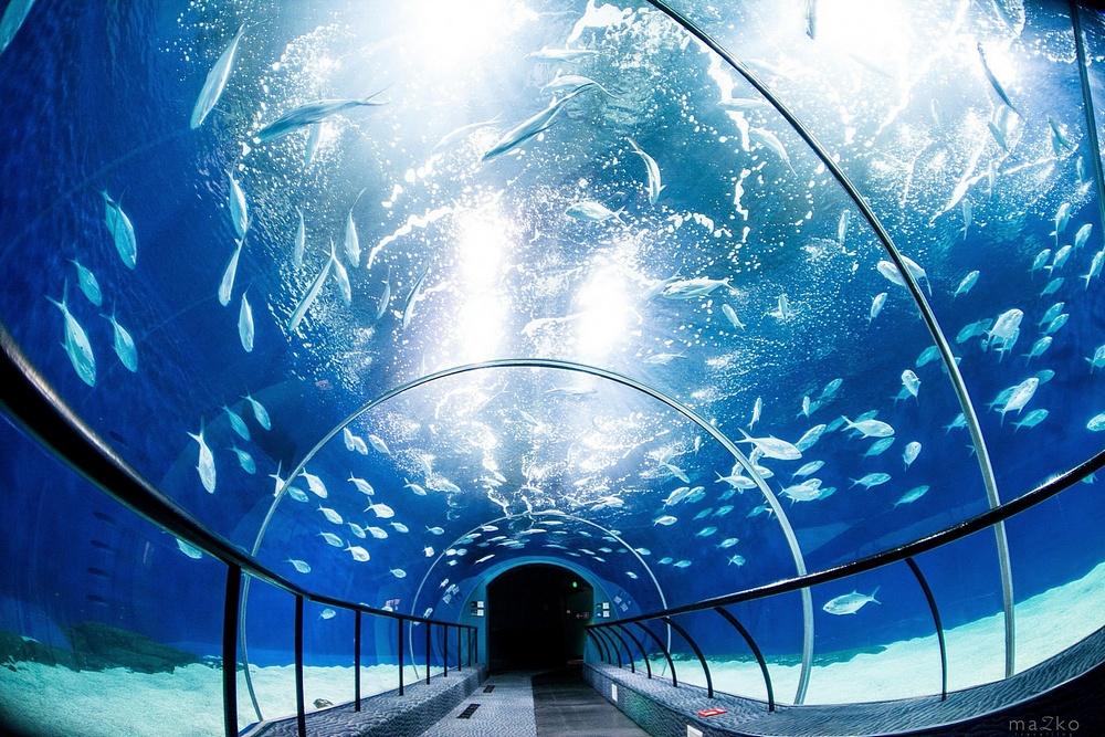 Что посмотреть в Шанхае: Шанхайский Океанариум