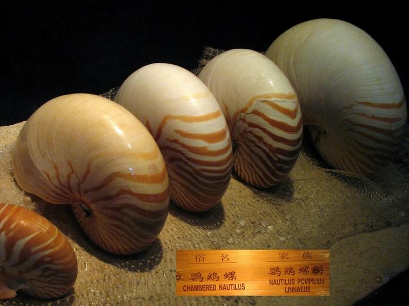Музей Морских Раковин, Санья, Хайнань