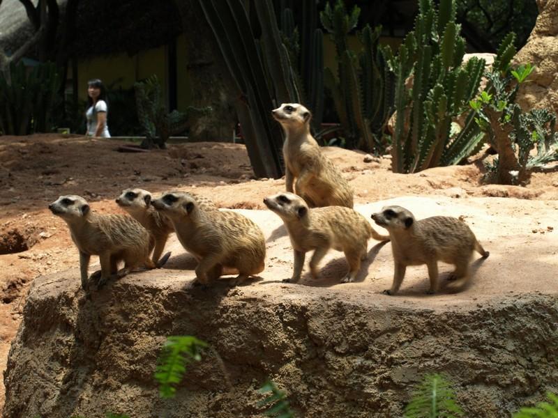 Что посмотреть в Гуанчжоу за 1 день: Зоопарк