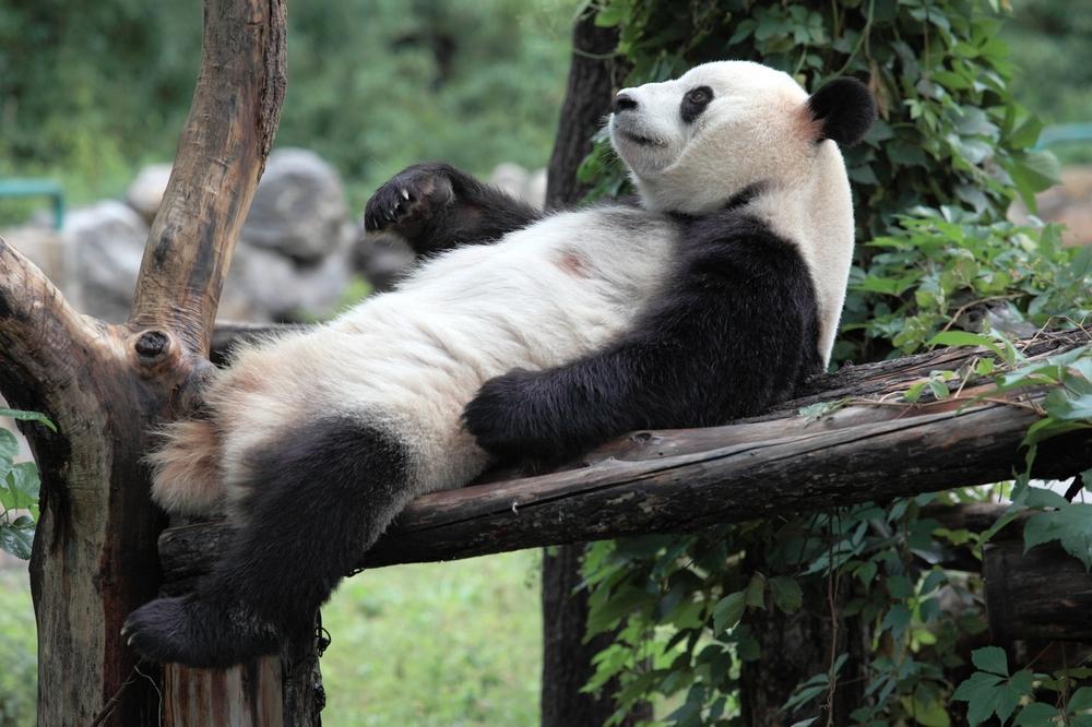 Достопримечательности Пекина: зоопарк