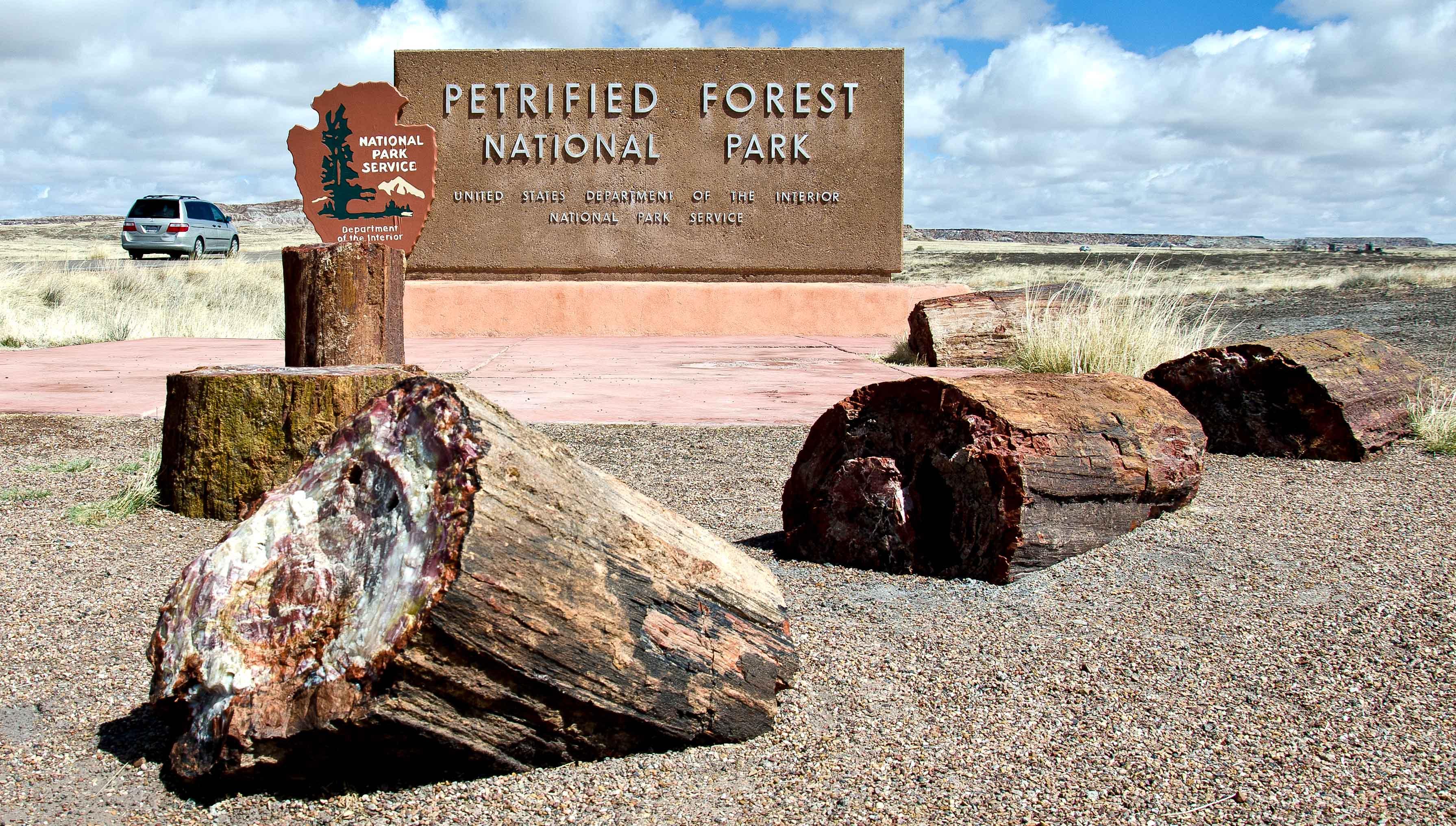 Парк окаменевших деревьев