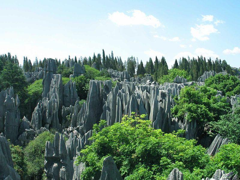 Каменные леса