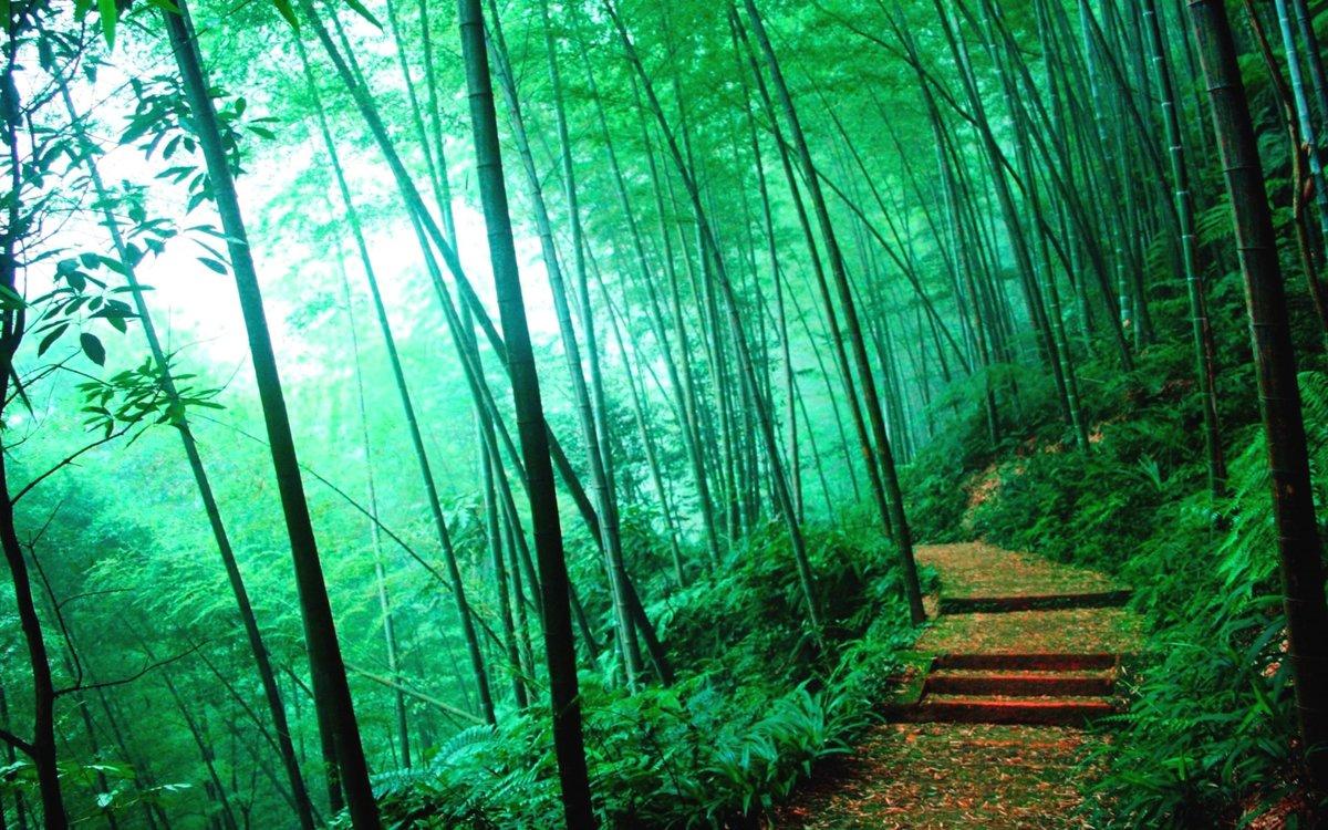 Мир бамбуков»