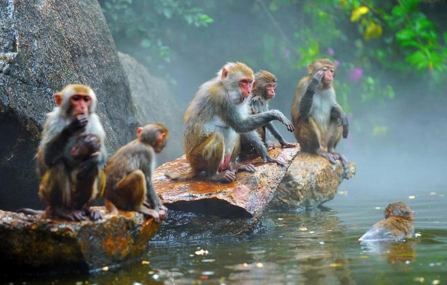 Заповедник обезьян