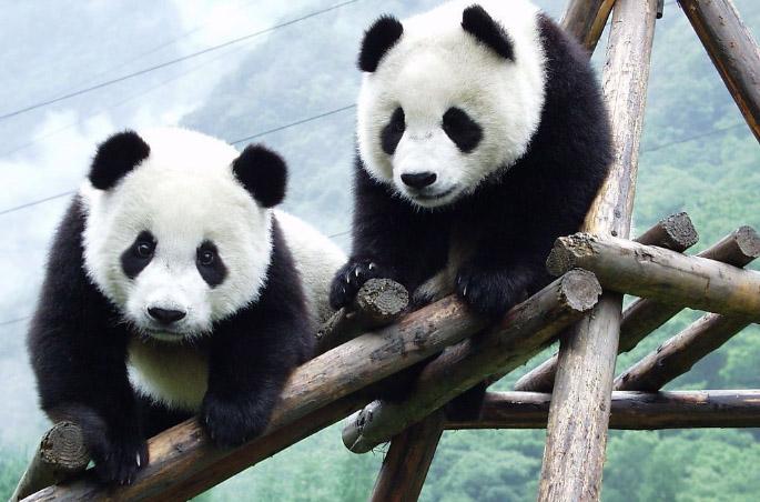 Панда-дипломатия